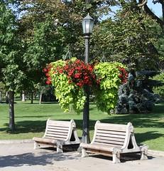 Bench Monday - HBM! (Daryll90ca) Tags: bench benchmonday niagara niagarafalls ontario canada ontariocanada