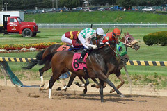 "2018-08-31 (75) r5 much tighter run for place, show and 4th (JLeeFleenor) Tags: photos photography maryland marylandracing timonium mdstatefair fair horseracing outside outdoors jockey جُوكِي ""赛马骑师"" jinete ""競馬騎手"" dżokej jocheu คนขี่ม้าแข่ง jóquei žokej kilparatsastaja rennreiter fantino ""경마 기수"" жокей jokey người horses thoroughbreds equine equestrian cheval cavalo cavallo cavall caballo pferd paard perd hevonen hest hestur cal kon konj beygir capall ceffyl cuddy yarraman faras alogo soos kuda uma pfeerd koin حصان кон 马 häst άλογο סוס घोड़ा 馬 koń лошадь"