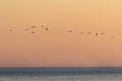 vol de canards (Guit07) Tags: canard mer finistère bretagne coucherdesoleil paysage landscape