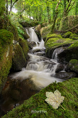 Melan-Colly (http://www.richardfoxphotography.com) Tags: petertavy collybrookfalls dartmoorlandscape dartmoornationalpark dartmoor outdoors river rivertavy stream brook waterfall waterfalls