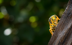 have a drink (markus364) Tags: wespe wasp insekt insect macro makro natur nature
