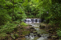 Peaceful Trail (rschnaible (On Holiday)) Tags: saluda north carolina the south landscape outdoor hike hiking woods forest trees waterfall pearson falls