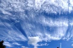 DSC_1606 (PeaTJay) Tags: nikond750 reading lowerearley berkshire gardens outdoors nature blue sky clouds