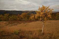 høstlandskap (KvikneFoto) Tags: landskap natur norge hedmark kvikne nikon tamron