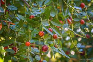 ricchezza e colori del sottobosco...  richness and colors of the undergrowth...
