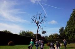 Yorkshire sculpture park. #giuseppepenone #autumn #ricohgr2 #yorkshiresculpturepark (continavxm) Tags: ricohgr2 giuseppepenone autumn yorkshiresculpturepark