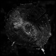 DV VIII (*TimeBeacon* [-off-]) Tags: blackandwhite blackwhite bw bnw texture monochrome stump tree tb