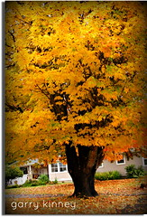 Fall.... (Garry's lens....) Tags: fall colorful pretty nature outdoors