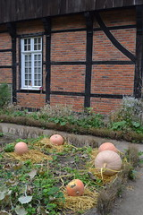 Münster (mademoisellelapiquante) Tags: europe germany history openairmuseum culture munster northrhinewestphalia pumpkins