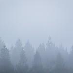 Foggy Trees thumbnail