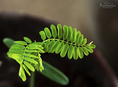 A new beginning! (dr_malar) Tags: leaf leaves green seed seedling growth nature naturephotography gogreen love