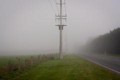 20180915_0042_40D-40 Fog on Tram Road (full frame) (johnstewartnz) Tags: canon canonapsc apsc eos 40d canon40d canoneos40d 40mmstm 40mm ef40mmf28stm fog tramroad powerline powerpole rural road