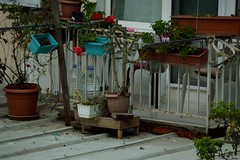 mi neighbours (dalyadiker) Tags: tree dry autumn september turkey home balcony neighbourhood urban city nature