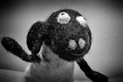 261:365 - Fuzzy Sheep (LostOne1000) Tags: sheep blackandwhite mammals nature toys things september day261365 180918 365the2018edition pentax pentaxlenses camera equipment photography 365challenge technicalphotography animals pentax50f28macro pentaxk1 3652018 cy365 marion iowa unitedstates us