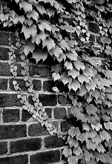Vine View (pjpink) Tags: urban scottsaddition evening rva richmond virginia july 2018 summer pjpink 2catswithcameras blackandwhite bw monochrome