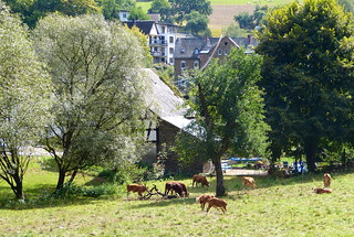 2018 Germany // Westerwaldwanderweg 3 // Blick auf Bierhaus