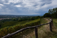 Savognano del Torre (paolo-p) Tags: nuvole clouds linee lines vigneti wineyards savorgnanodeltorre povoletto