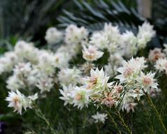 DSC_5427 e5 10x8 (J Telljohann) Tags: singapore flowerdome
