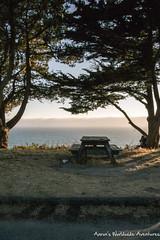 A picnic table overlooks the Pacific Ocean (adventurousness) Tags: trees highway 1 ocean golden hour dusk pacific coast magic picnic sea goldenhour highway1 magichour pacificcoasthighway pacificcoast davenport california unitedstates us
