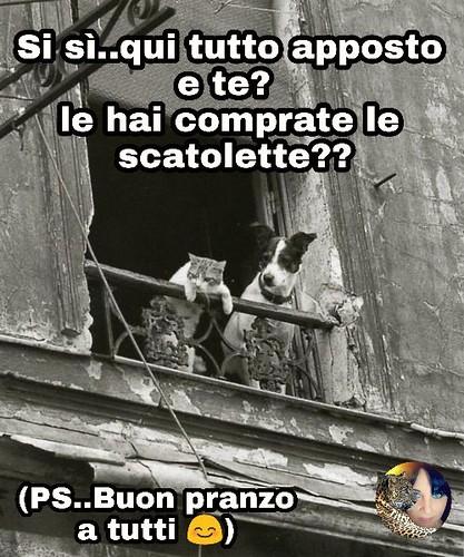 Link Divertenti Buon Pranzo Page Facebook Titty Httpswww