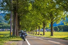 _DSC9967 (MIHARANNRANN) Tags: 琵琶湖 滋賀 メタセコイア並木 バイク