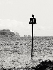 The Lookout.... (markwilkins64) Tags: markwilkins contrast boats sailing sea solent mono monochrome blackandwhite post bird isleofwight theneedles