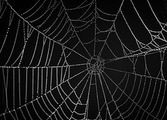 Spiders web (Benjamin Joseph Andrew) Tags: spider spooky halloween web autumn wet morning patten natural detail construction