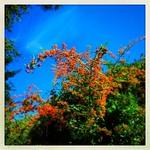 Sliding into Autumn thumbnail