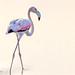 romancing the flamingo...