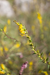 Macro su fiore giallo (Giorgio--) Tags: kmz mc mir 20mm macro russian lens