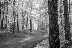 Toward The Light (Neal3K) Tags: ir infraredcamera kolarivisionmodifiedcamera henrycountyga georgia bw blackandwhite
