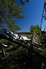 After the storm (jannaheli) Tags: suomi finland helsinki arabia lammassaari nikond7200 luonto nature luontovalokuvaaja naturephotography taivs sky bluesky syksy autumn outdoor sunday