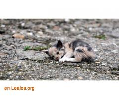 Masacre de gatos en Beire-Navarra (Leales.org • tu guía animable) Tags: adopta adoptar adoptanocompres noalmaltratoanimal adopción sebusca extraviado perdido perro gatos lealesorg