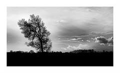 Silhouette (Pluie du matin) Tags: nb bw monochrome arbres trees silhouette paysage landscape ciel sky nuages clouds blackandwhite