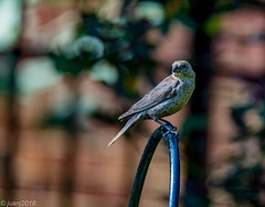 Bird (JuanJ) Tags: nikon d850 lightroom art bokeh nature lens light landscape white green red black pink sky people portrait location architecture building city iphone iphoneography square squareformat instagramapp shot awesome supershot beauty cute new flickr amazing photo photograph fav favorite favs picture me explore interestingness wedding party family travel friend friends vacation beach georgetown scottcounty august 2018 usa america bird animal