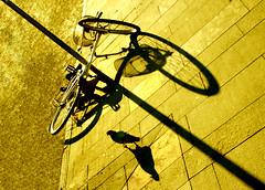 La caduta (meghimeg) Tags: 2018 chiavari bici bicicletta bike piccione pidgeon palo pole caduta fall ombra shadow sole sun seppia sepia