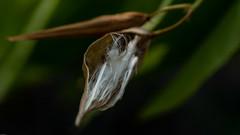 Seed (Alta Alteo) Tags: samen seed bausenberg herbst eifel sony alpha ilce7rm2