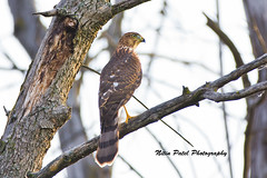 IMG_7331 (nitinpatel2) Tags: bird nature nitinpatel
