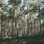 Naturwaldreservat Grenzweg - Nürnberg thumbnail