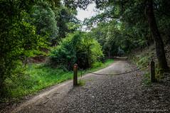 Paso estrecho (SantiMB.Photos) Tags: 2blog 2tumblr 2ig collserola cerdanyola camino way path sendero cadena chain bosque forest geo:lat=4145978611 geo:lon=212685484 geotagged cerdanyoladelvalles cataluna españa esp