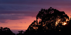 End of the Purple Hour (armct) Tags: goldcoast hinterland bilinga beach elanora eucalypt forest remnant pacificocean horizon skyline silhouette purple morning telephoto zoom nikon d810 200500mm nikkor clouds