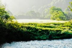 early morning mist (PinoyFri) Tags: morningfog nebbiamattutina 晨霧 brouillarddumatin 朝霧 earlymorningmist brouillardtôtlematin fog brouillard niebla meadow danube donau prairie prado danubevalley donautal paysage