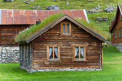 Steinklepp - Norway (Melvin Debono) Tags: melvin debono photography canon 7d travel nature clouds cloudy laerdal kommune sogn fjordane road grass landscape sky water waterfall goat goats middle borlo og norway animal sheep rock house home