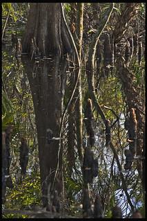 Lake Woodruff #4 2012; Cypress Swamp