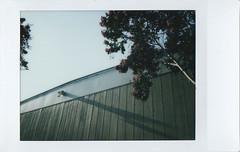 wall lines (jayplorin) Tags: fujifilm instax mini 8 instant film wall tree