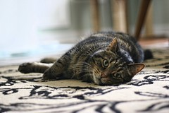 Buckley Mode: Hoping For Kibble (~ Liberty Images) Tags: pet buddy buckley cat feline tabby