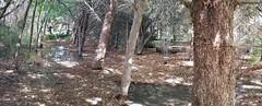 back yard grove (JoelDeluxe) Tags: southvalley newmexico nm joeldeluxe deluxevalleyorchard flowers fruit ponds walkies sky green pink blue yellow