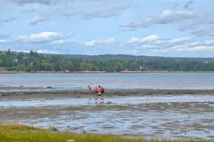 Clam Diggers Behind Crescent Beach, Nova Scotia (internat) Tags: 2018 canada novascotia ns southshore cresentbeach clamdiggers eosm5 aurorahdr hdr