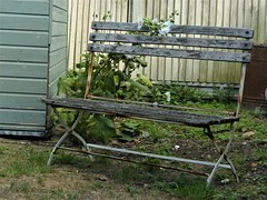 hollohocks and bench (juggzy_malone) Tags: whitstable seaside august 2018 bench hollyhock shabby chic
