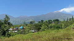 Gunung Arjuna, Trawas, East Java (Sekitar) Tags: indonesia jawa ostjava java timur jawatimur gunung arjuno api vulcano arjuna rice fields trawas east sawah pemandangan view landscape panorama